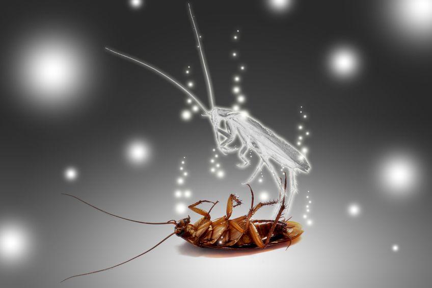 desinsectisation-cafards-blattes-fourmis-punaises-de-lit-destruction-nid-guepes plaisir 78 yvelines