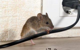 ajp-groupe-ile-de-france-desinsectitation-deratisation-desinfection-ventilation-rat-rats-souris-1