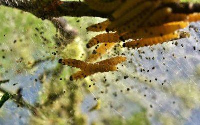 Comment différencier les mites alimentaires des mites de vêtement dans les Yvelines ?