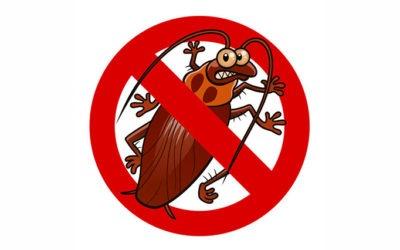 Désinsectisation des cafards ou des blattes dans les Yvelines, comment s'en débarrasser ?