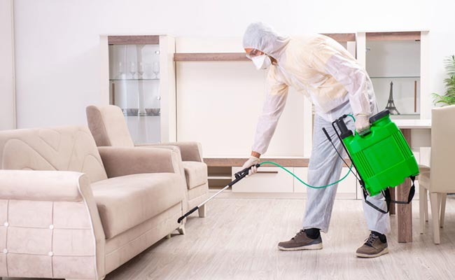 desinsectitation deratisation desinfection nettoyage ventilation desinfections plaisir 78 yvelines
