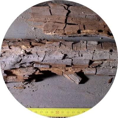 Extermination des insectes xylophages et champignons du bois Pourritures cubliques et fibreuses à plaisir et dans les yvelines 78